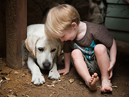 Oakley Gauge 8 >> Photography the Labradors of Bainbridge
